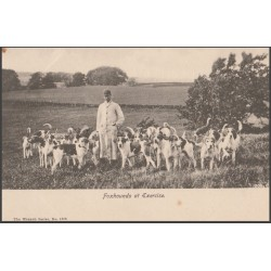 Vintage Postcard Foxhounds...